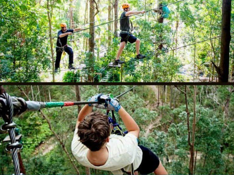 Tree Top Challenge at Currumbin